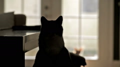 Cats In House - Black Kitty Silhouette and Orange Tabby Cat Walking Inside House Stock Footage