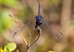 Large dragonfly - stock photo