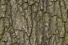 Tree barks Stock Photos