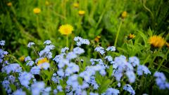Summer flowers blue with patches of sunlight Stock Footage