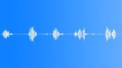 Animals_blackbird_02 Sound Effect