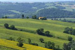 Stock Photo of summer landscape in marches (italy)