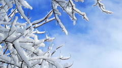Stunning Snow Covered Branches in Sunlight Stock Footage