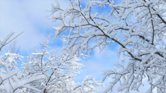 Beautiful Snow Covered Branches in Sunlight Stock Footage