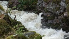 Stock Video Footage of Mountain Stream flowing fast after rainfall