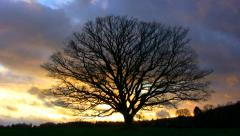 Time lapse of leafless oak tree with a setting sun against a rough autumnal sky Stock Footage