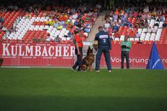 Sep 07, 2014 nurnberg working ability test on biggest german shepherds dog sh Stock Photos