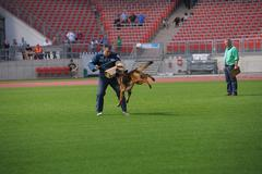 Stock Photo of sep 07, 2014 nurnberg working ability test on biggest german shepherds dog sh