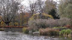 LAke Pond  ducks natural green park Stock Footage