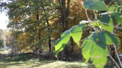 Leaves blow in breeze in front of a forested area Stock Footage