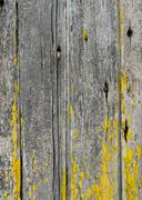 vertical weathered boards with lichen  for use as texture - stock photo