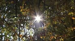 Sun glistening through the trees - stock footage