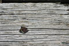 Eroded wooden board with rough grain Stock Photos