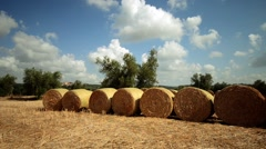 Tuscany field with hay bales Stock Footage