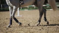 Woman trains horse Stock Footage