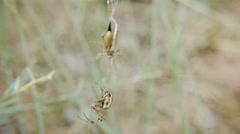 Spider vs grasshopper Stock Footage