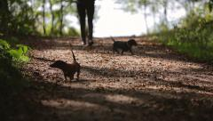 Woman walks with two dogs in the woods video with sound Stock Footage