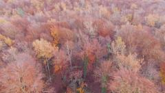 Aerial View Flying Over the Top of the Beech Trees Stock Footage