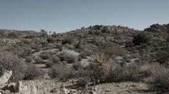 Joshua Tree National Park flat landscape Stock Footage