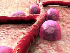Vein, Beta cells, insulin - stock illustration