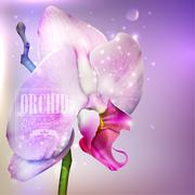 Stock Illustration of flower background with blossom orchid