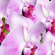 flower background with blossom orchid - stock illustration