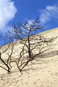 Famous dune of pyla, the highest sand dune in europe, in pyla sur mer, france. Stock Photos