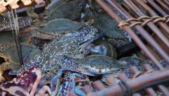 CRAB FISHING & SELLING - Close up of live crabs in bamboo trap Stock Footage