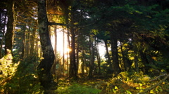 4K morning sunrise timelapse mountain forest sun behind trees branches - stock footage