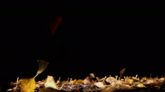 autumn leaf fall on a black background - stock footage
