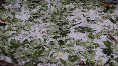 Hail Storm with Fallen Leaves Stock Footage