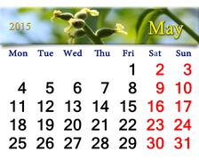 calendar for may of 2015 with image of blooming walnut - stock illustration