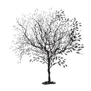 tree silhouette. the trunk and leaves in separate layers. vector illustration - stock illustration