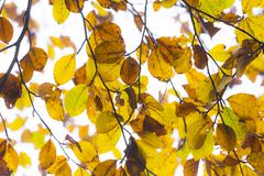 Leaves in fog at the tree in indian summer colors Stock Photos