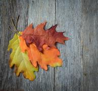 autumn leaves on rustic wooden background - stock photo