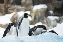 Emperor penguins Kuvituskuvat
