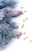 Stock Photo of Spruce Branch with Hoar-Frost