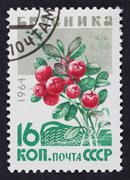 ussr postage stamp cowberry - stock photo