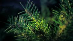 Abstract Tree Pine Stock Footage