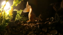 Award winning Gold fish - mysterious dark close-up footage Stock Footage