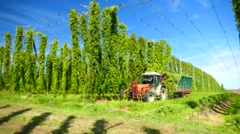 Miniature Time-Lapse Hops Harvester picking machine in field Stock Footage