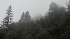 Fog through evergreen tress, California mountains Stock Footage