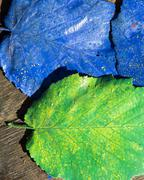 two colorful leaves - stock photo