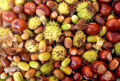 Colourful autumnal conkers, acorns, beechnuts and cobnuts - stock photo