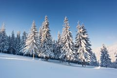 winter - stock photo