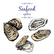 Oysters. - stock illustration