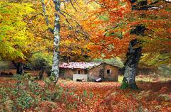 house in autumn forest - stock photo