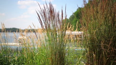 Grass blowing in the wind next to a lake Stock Footage