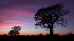 Ambient Oak trees silhouette after sunset nature background Stock Footage