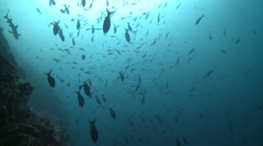 rocky reef with schooling fish Cocos Costa Rica - stock footage